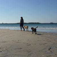 dog walk on sennen cove with Roselands caravan park St Just Cornwall