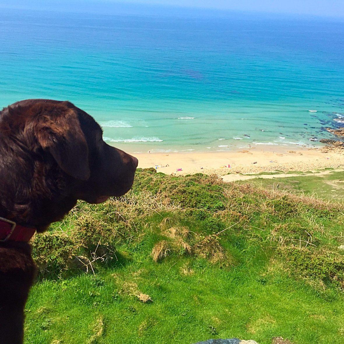 Dog friendly caravan park Cornwall