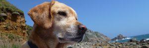 dog friendly accommodation cornwall